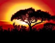 Passion Kenya, Tanzanie, Zanzibar