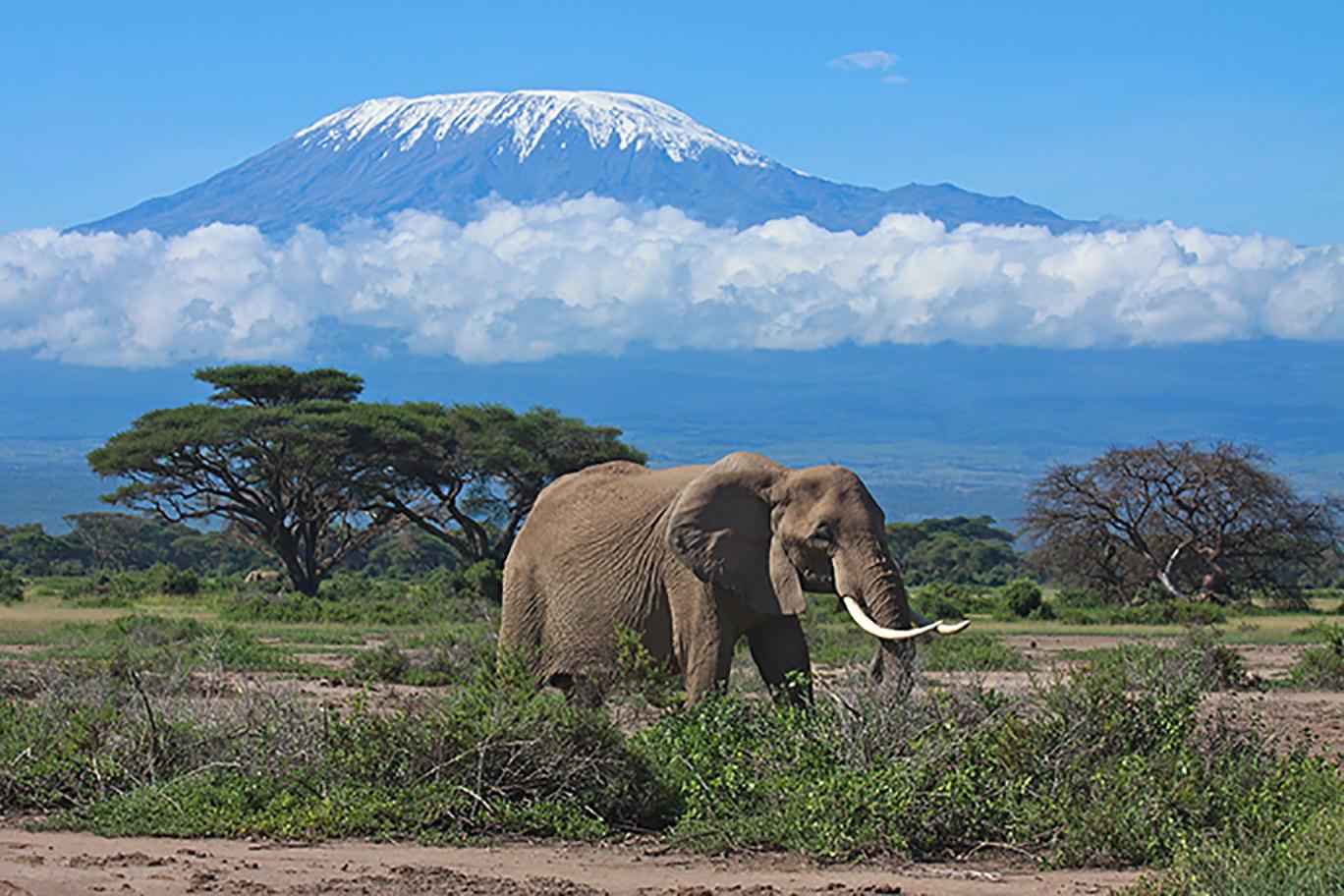 les animaux qu'on rencontre au kenya