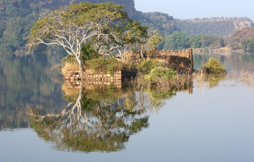 Ranthambore (safaris)