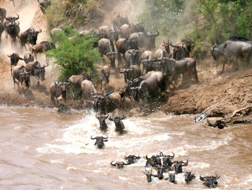 Parc National du Serengeti (PD/D/S)