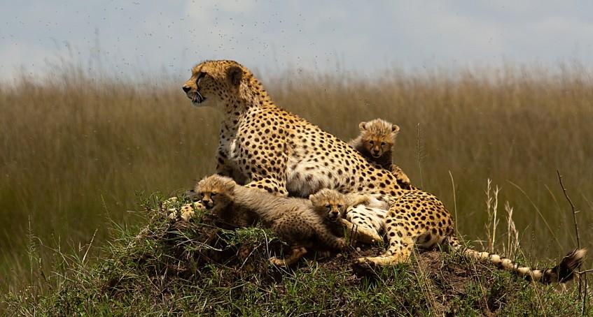 Eyasi - Olduvai - Parc National du Serengeti (PD/D/S)