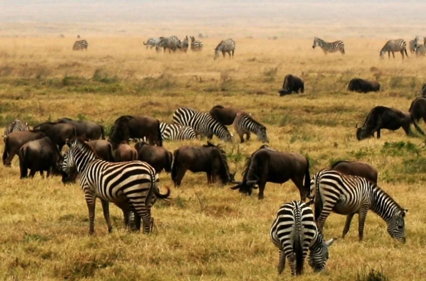 Parc National du Serengeti - Cratère Ngorongoro - Karatu (PD/D/S)