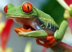 Grenouille Costa Rica 6 animaux à ne pas manquer durant votre prochain voyage au costa