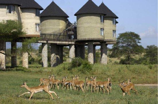 Parc National Amboseli - Parc National Tsavo