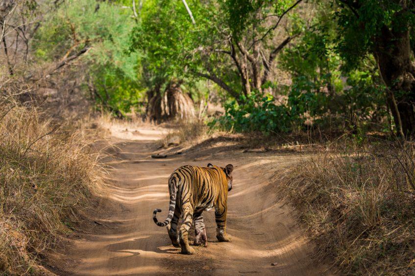 Jaipur - Ranthambore (safari) (PD/D/S)