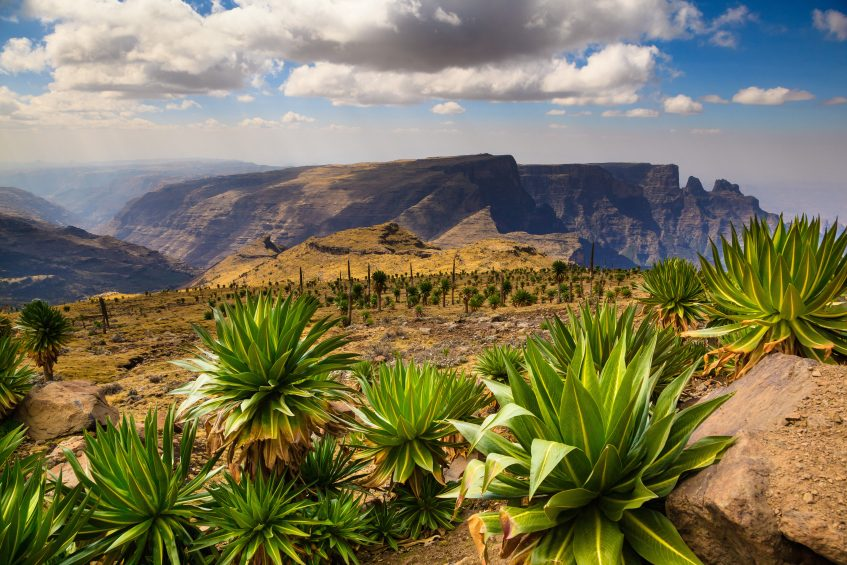 Parc National du Simien - Gondar