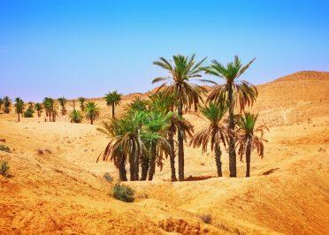 Passion Tunisie