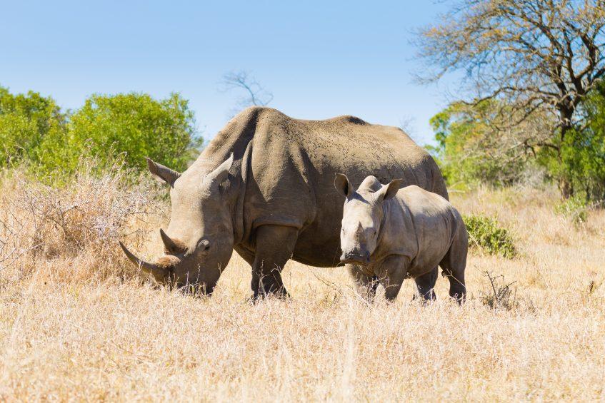 Safaris dans le Parc National de Hluhluwe