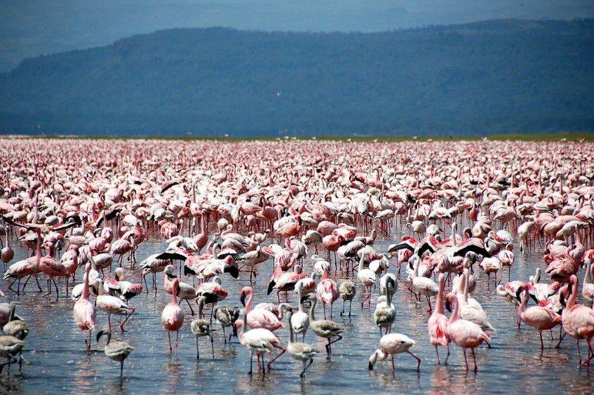 Lac Naivasha - Lac Nakuru - Lac Naivasha