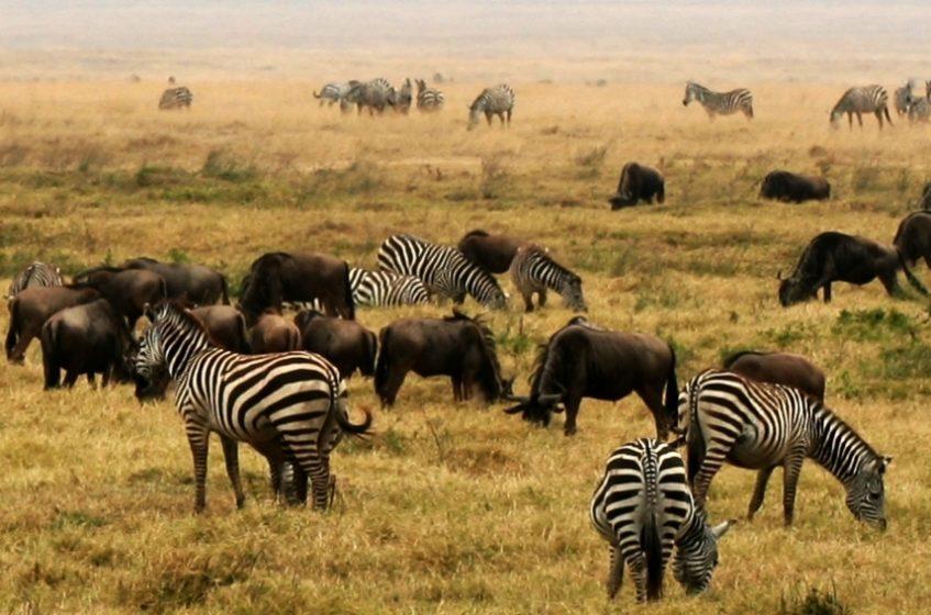 Parc National du Serengeti - Cratère Ngorongoro