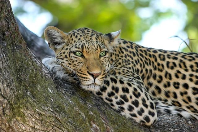 Les Chutes Victoria - Botswana