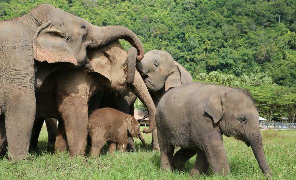 Chiang Mai Elephant Nature Camp - Chiang Mai