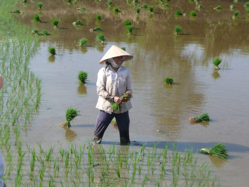 Ho Chi Minh  Cai Be - Vingh Long - Can Tho