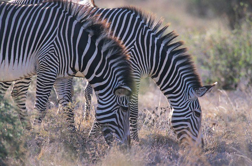 Réserve du Masaï Mara  Crescent Island - Elmentaita