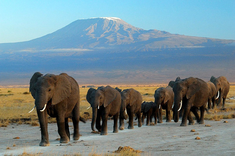 Parc National Amboseli