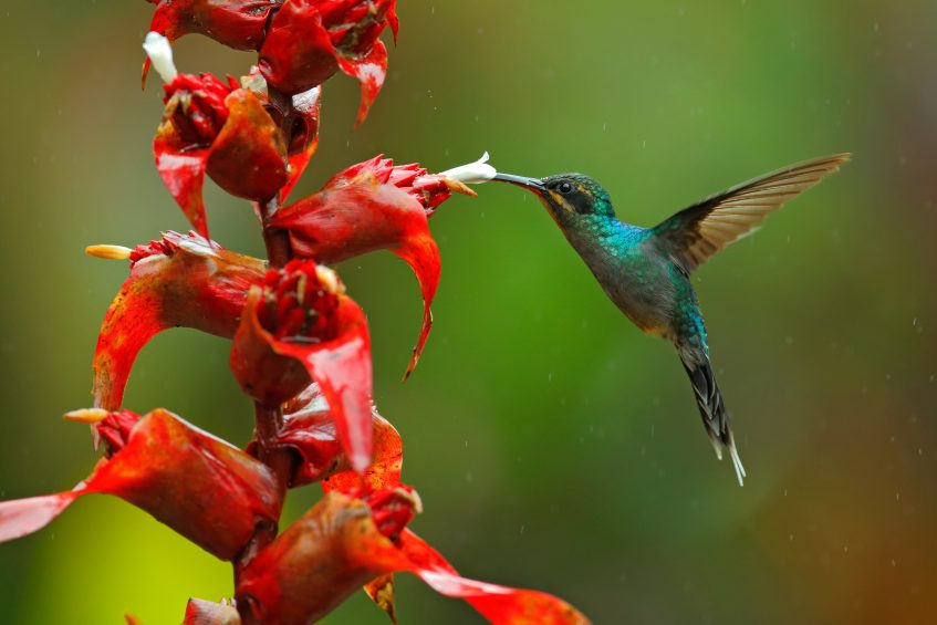 Monteverde  Punta Leona