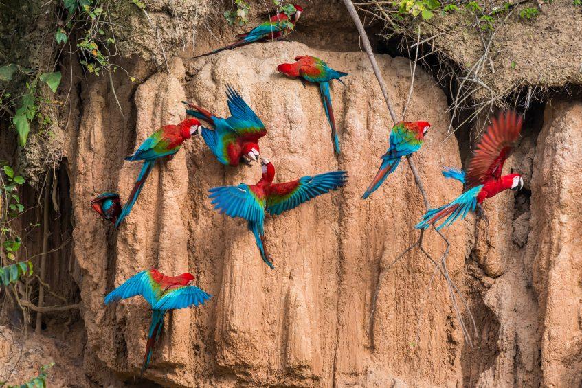 Amazonie  Puerto Maldonado - Lima (vol)