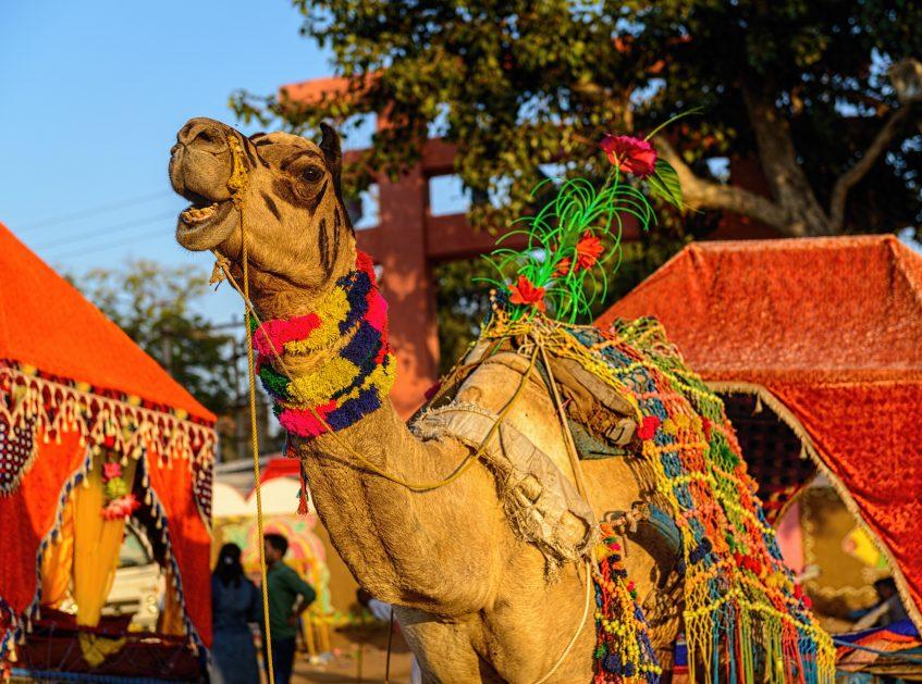 Sardargarh - Pushkar