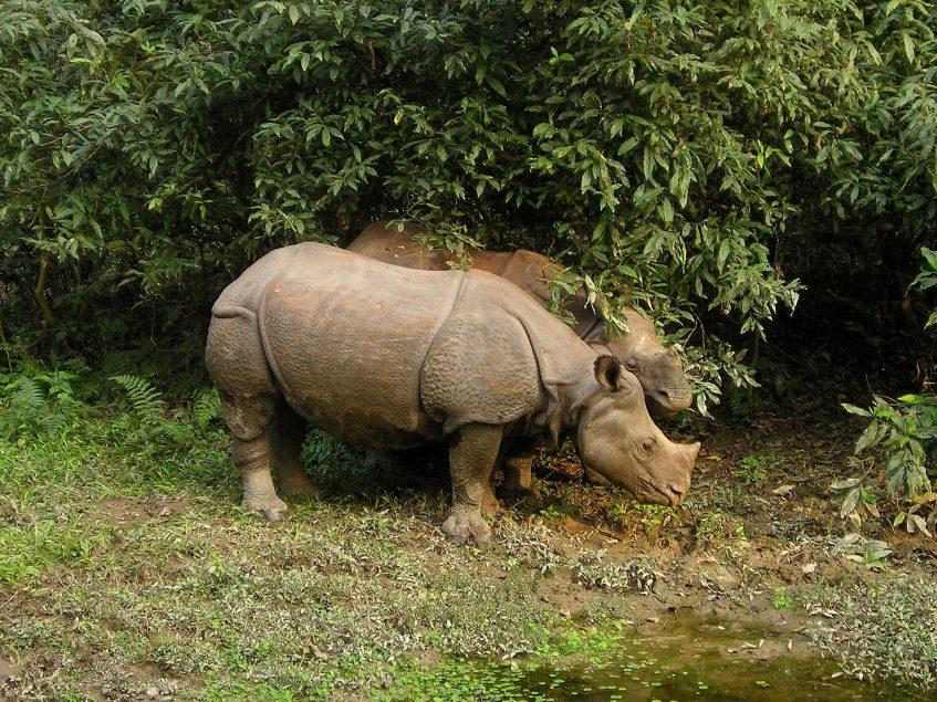 Katmandou - Chitwan
