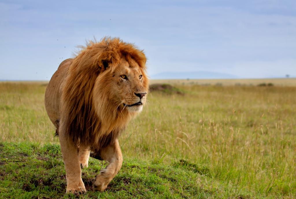 Nairobi  Réserve nationale du Masaï Mara