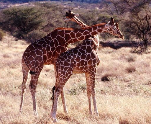 Lac Naivasha - Musée Karen Blixen - Parc National Amboseli