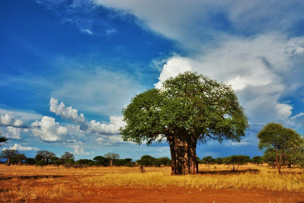 Région Ngorongoro  Parc national de Tarangire