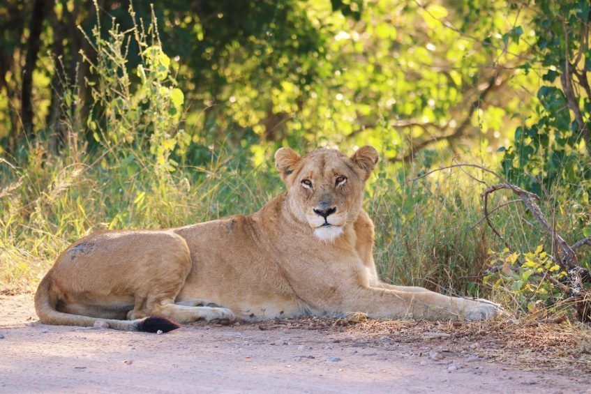 Hazyview - Safari Parc Kruger - Hazyview