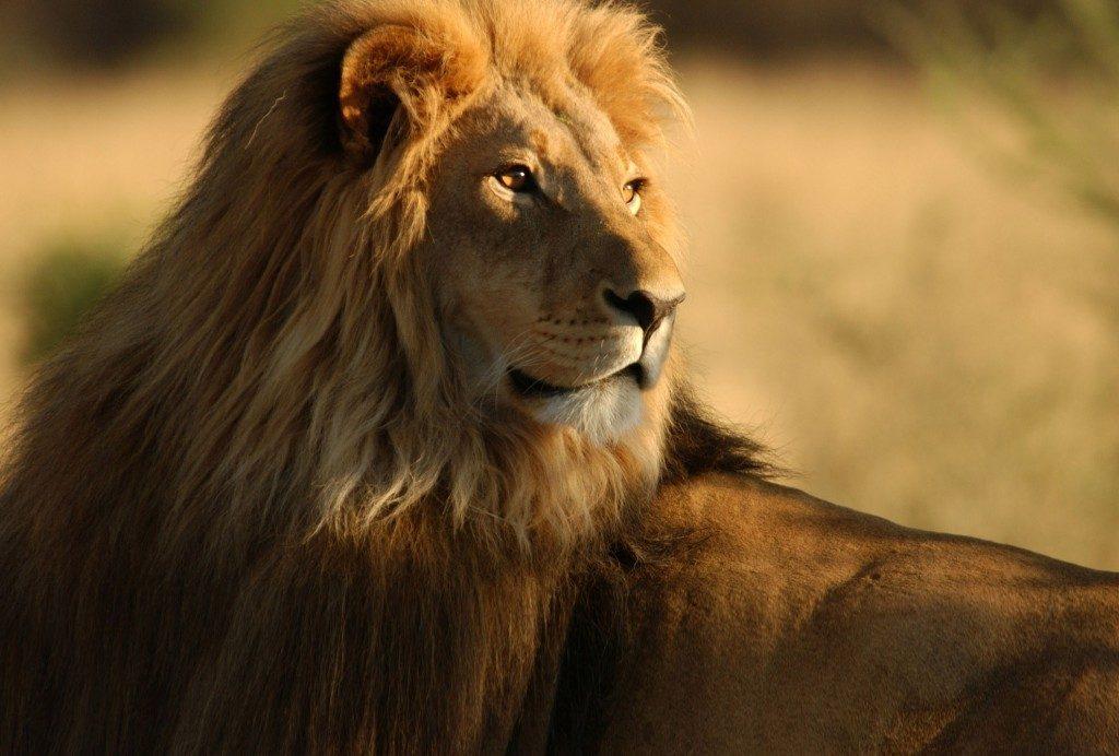 Passion Afrique du Sud, Zimbabwe et Botswana