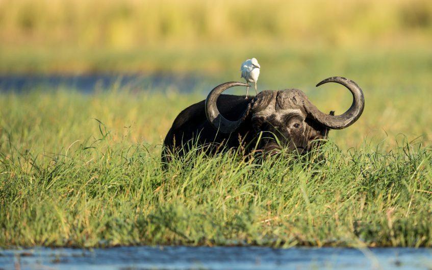 Botswana - Johannesbourg (vol)