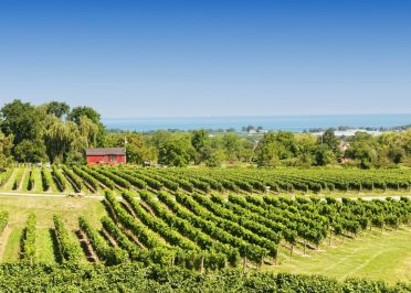 Vignobles et Distilleries en Ontario