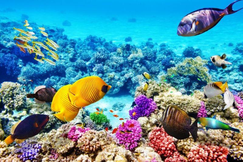 Cairns - Grande Barrière de Corail