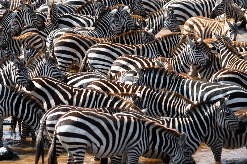 Amboseli - Namanga - Parc national de Manyara - Karatu